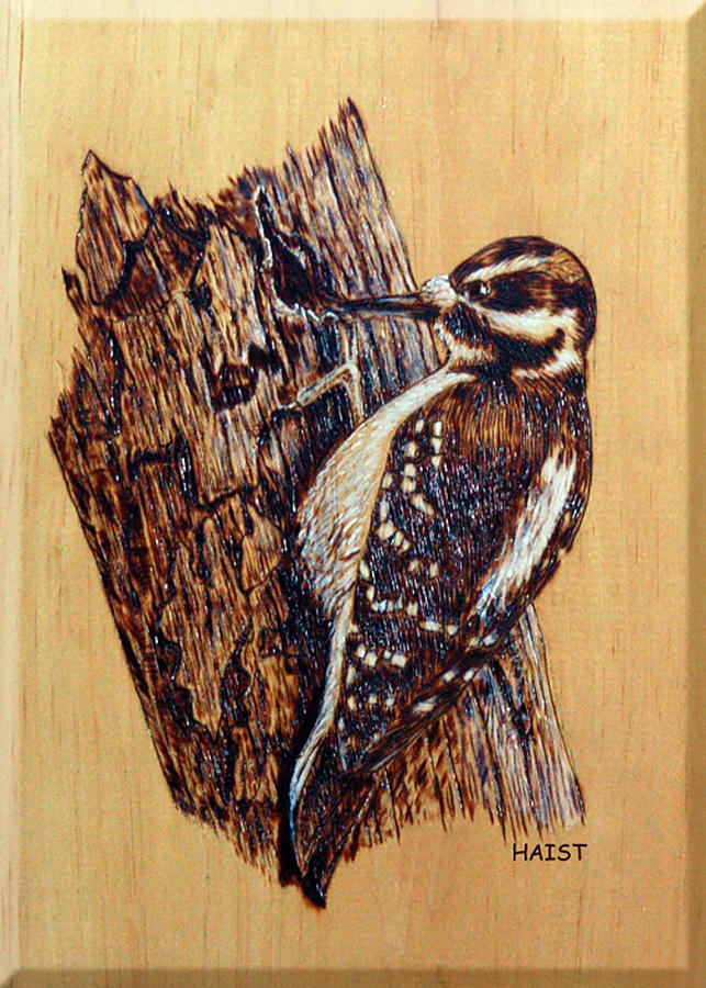 Woodpecker Pyrography - Hairy Woodpecker by Ron Haist