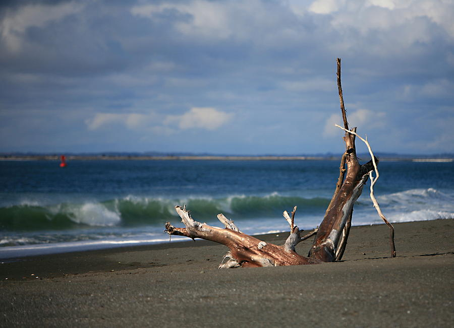 Beach Photograph - Halfmoon Bay Driftwood by Mike Coverdale