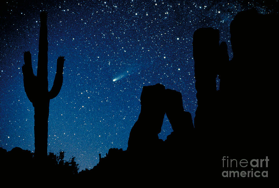Halley's Comet Photograph - Halleys Comet by Frank Zullo