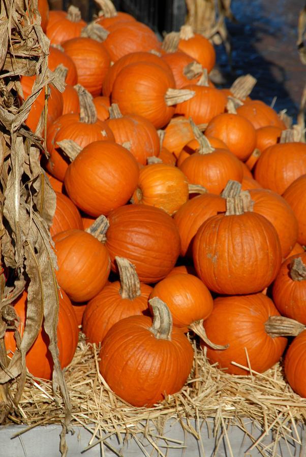 Pumpkins Photograph - Halloween 69 by Joyce StJames