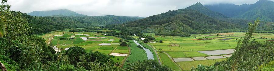 Hanalei Photograph - Hanalei Taro Fields by Michael Peychich