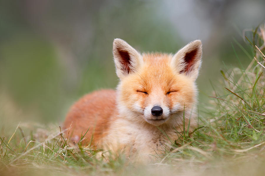 happy-baby-fox-roeselien-raimond Large Baby Shower