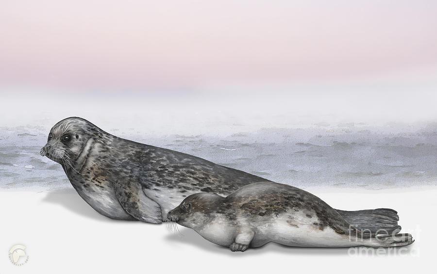 Harbour Seal Common Seal Phoca Vitulina - Marine Mammals - Seehund Painting