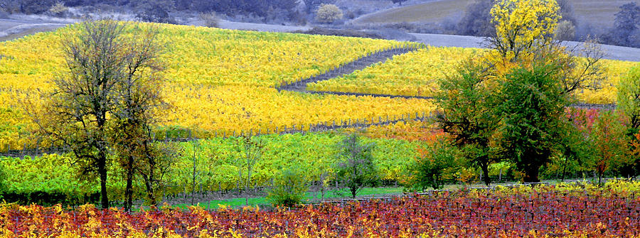 Harvest Time Photograph - Harvest Time by Margaret Hood