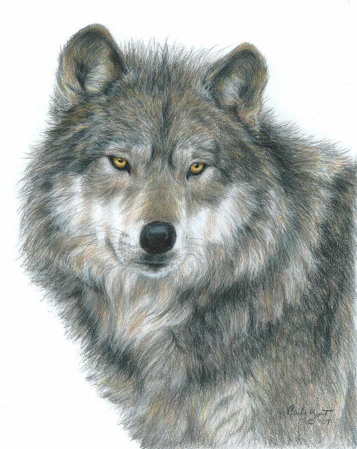 Wolf Drawing - Haunting Eyes by Carla Kurt