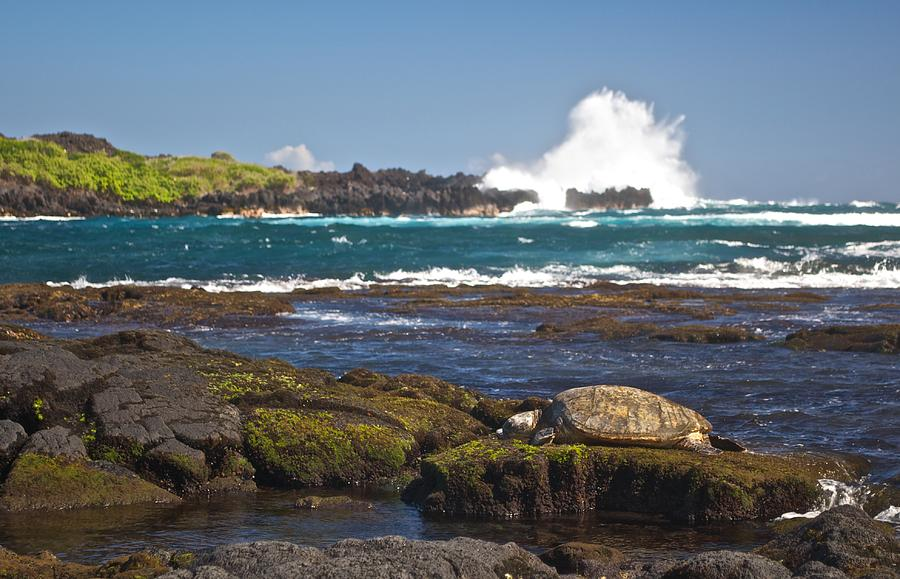 Hawai'i Photograph - Hawaiian Green Sea Turtle  by James Walsh