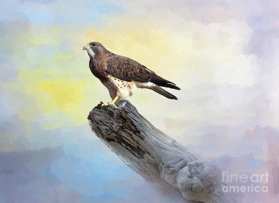 Hawk Digital Art