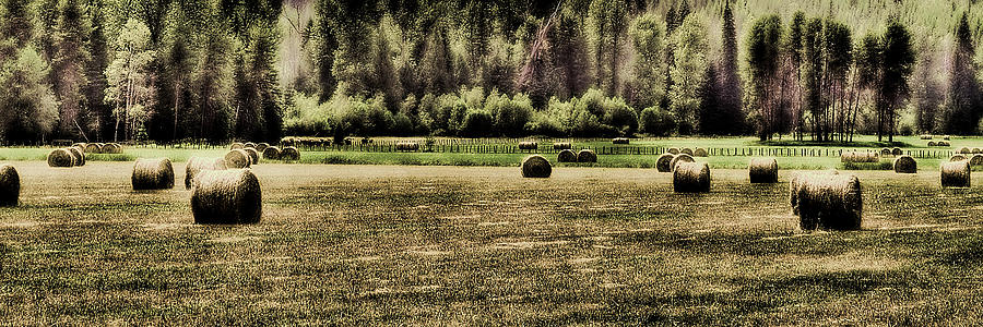 Hay Harvest Photograph
