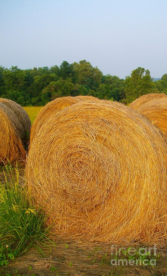 Farm Digital Art - Haybale by Sherry  Kepp