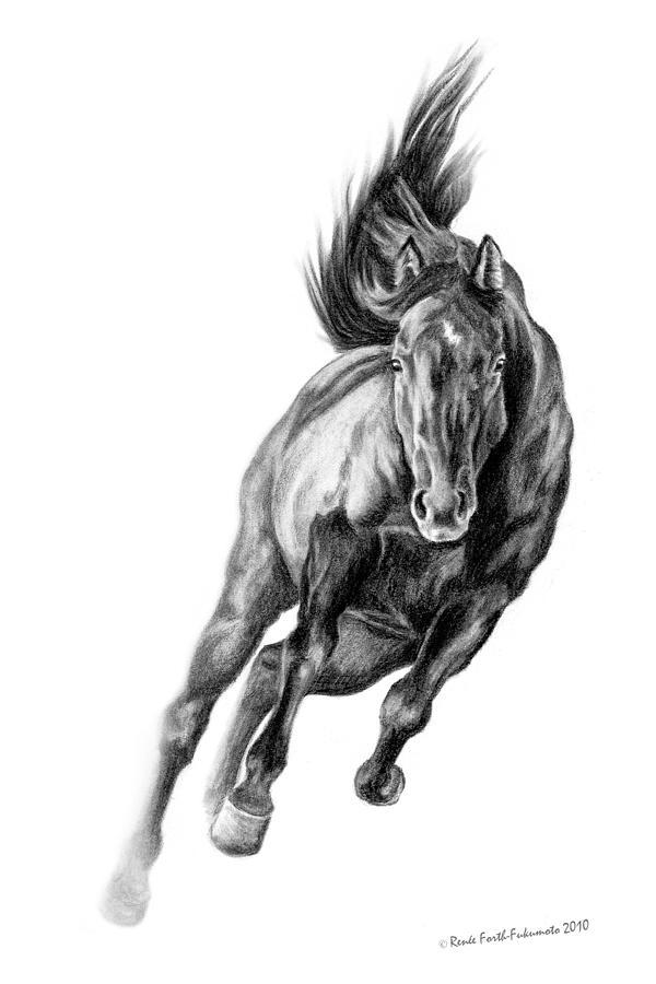 Horse Drawing - Head On by Renee Forth-Fukumoto