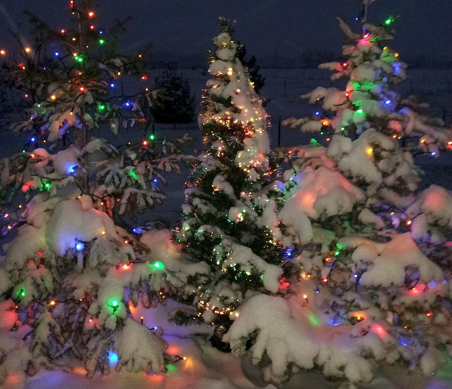 Heavily Snow Covered Christmas Trees Photograph by Judy ...