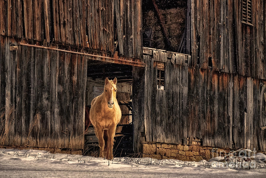 Horse Photograph - Hello Sweetheart by Lois Bryan