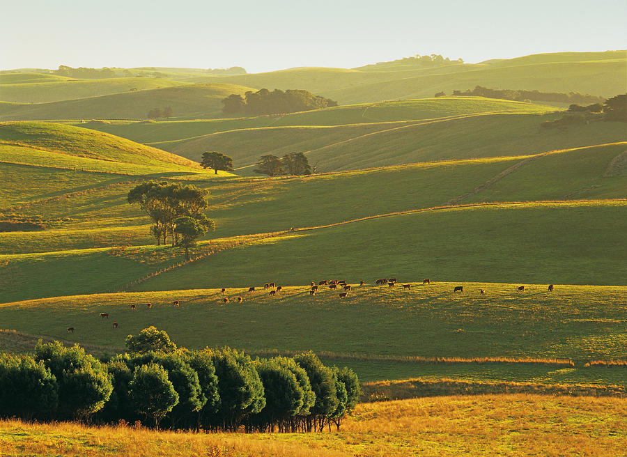 Korumburra Australia  city photo : ... korumburra in the strzelecki ranges south gippsland victoria australia