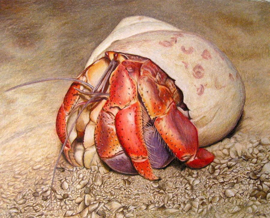 Hermit Crab Drawing by Corrina Thurston Hermit Crab Art