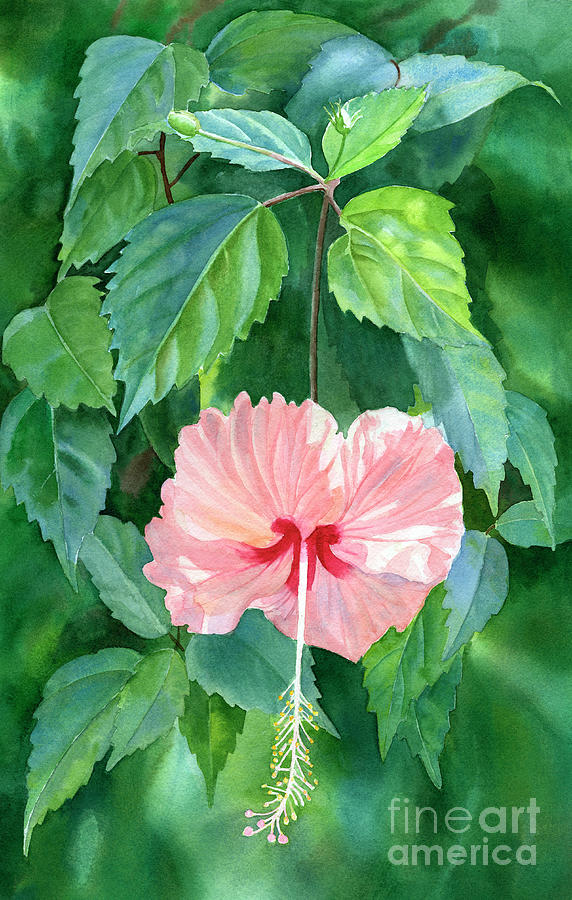 Hibiscus Sprinkle Rain With Leafy Background Painting By