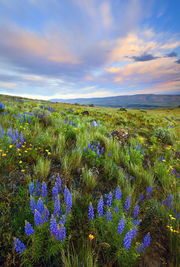 Wildflowers Photograph - High Desert Spring by Mike  Dawson