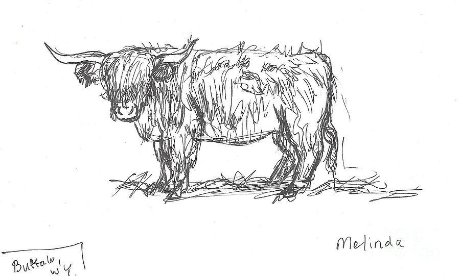 Highland Cow Field Sketch Drawing By Dawn Senior Trask