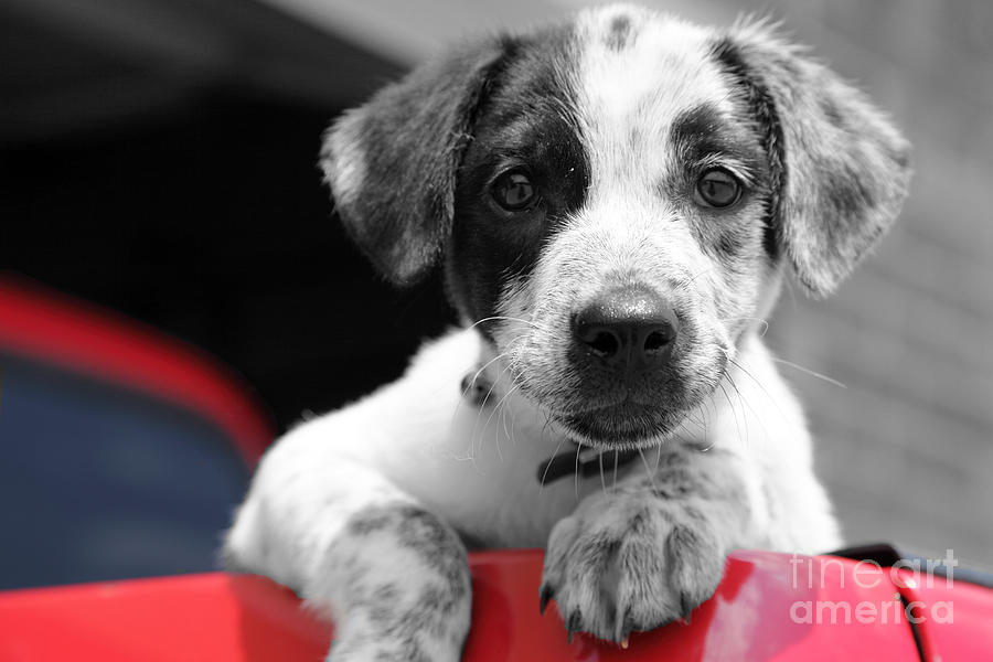 Dogs Photograph - Hmmm by Amanda Barcon