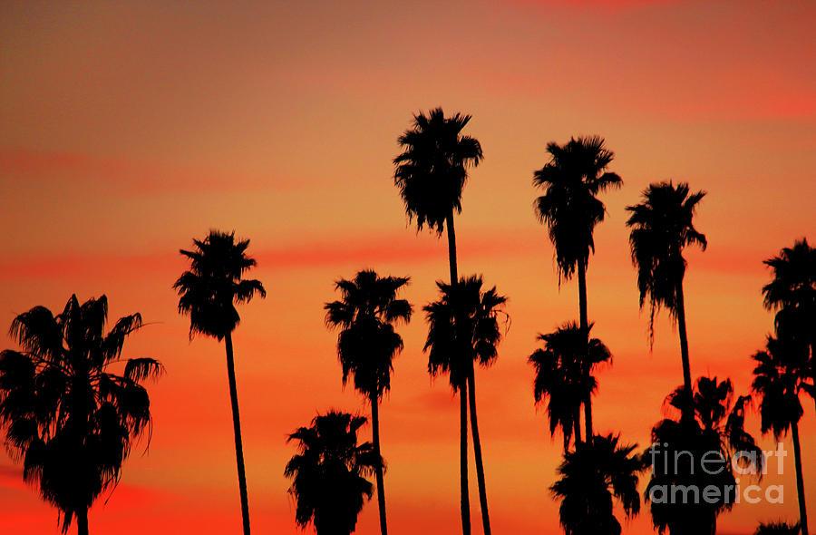 Hollywood Sunset Photograph - Hollywood Sunset by Mariola Bitner