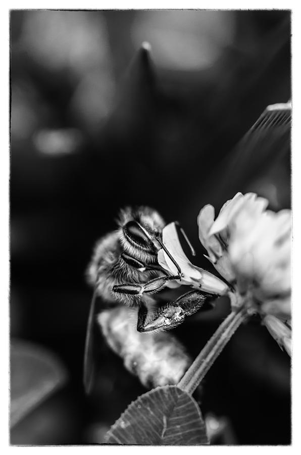 Animal Photograph - Honey Bee by James Bull