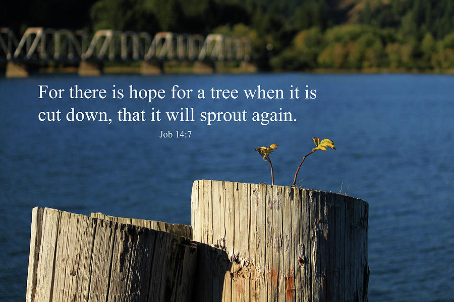Inspirational Photograph - Hope For A Tree by James Eddy