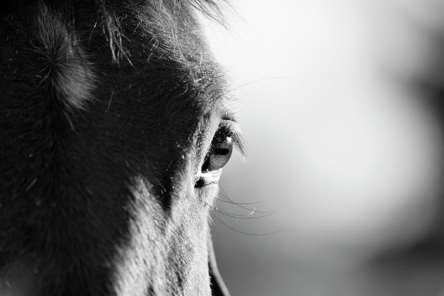 Horse In Black And White Photograph