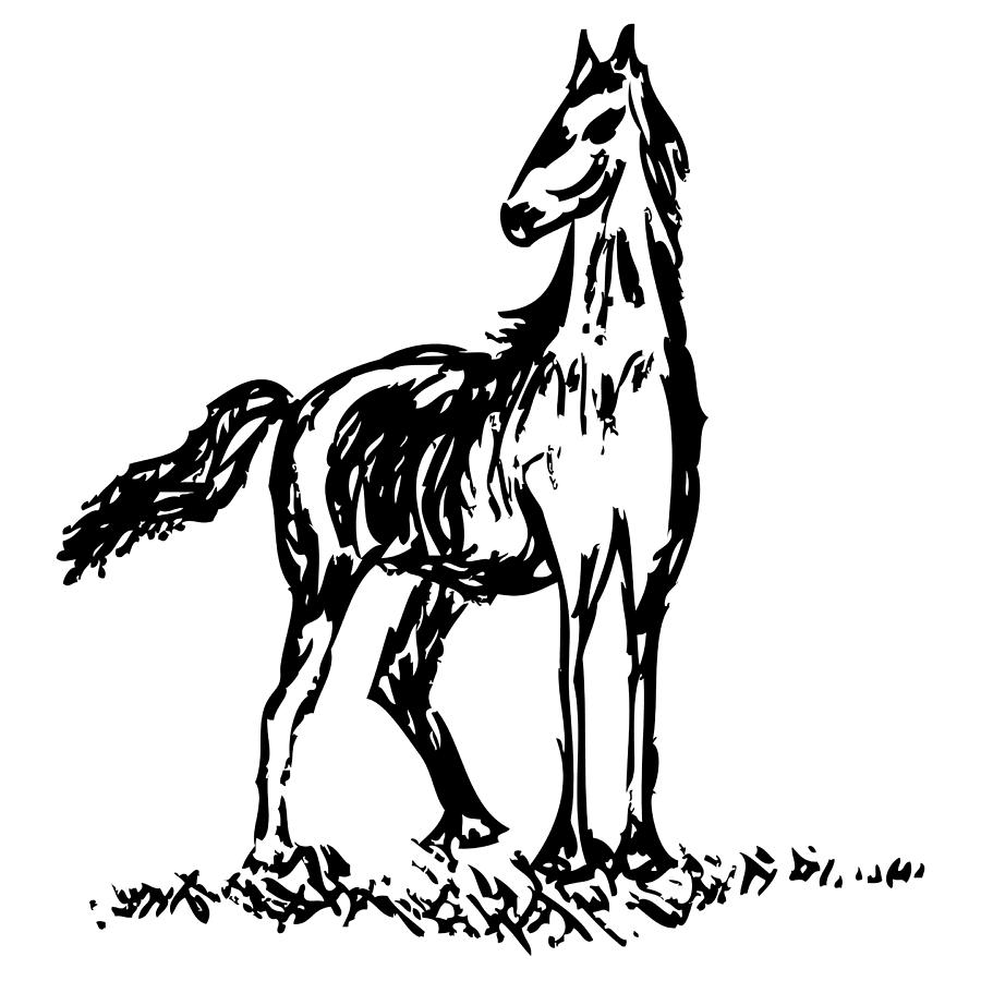 Drawing Drawing - Horse by Karl Addison