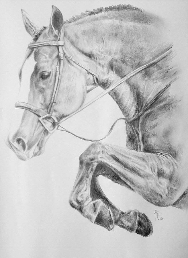 Jumping Horse Drawing Pencil Drawing - Horse Pencil Drawing by Arion Khedhiry