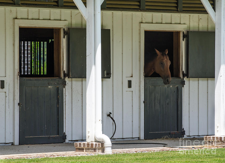 Horse Stall Photograph