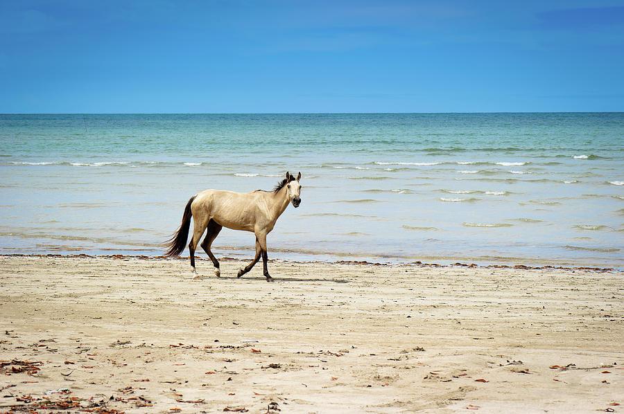 Horizontal Photograph - Horse Walking On Beach by Vitor Groba