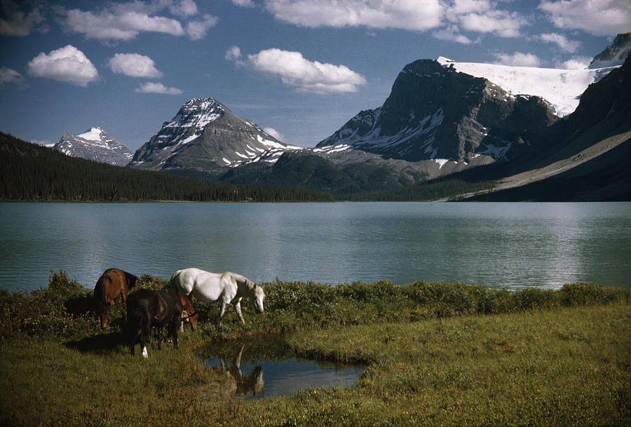Outdoors Photograph - Horses Graze In A Lakeside Meadow by Walter Meayers Edwards