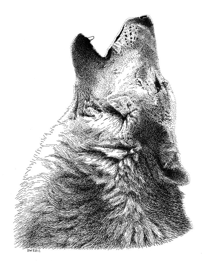 Gray Wolf Howling Drawing Howling Timber Wolf Dr...
