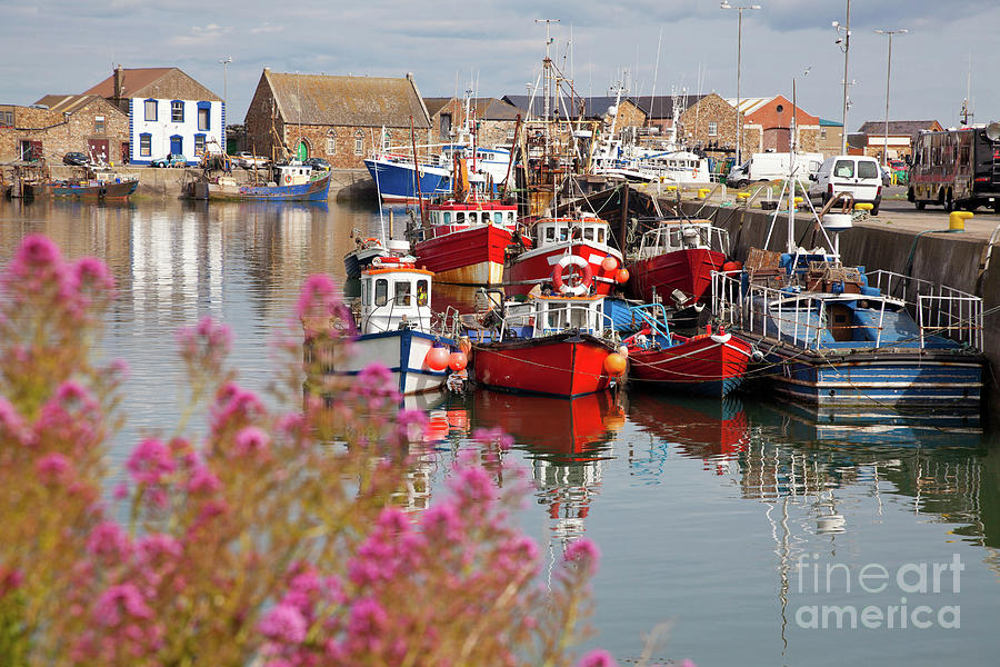 Harbor Photograph - Howth Harbour by Gabriela Insuratelu