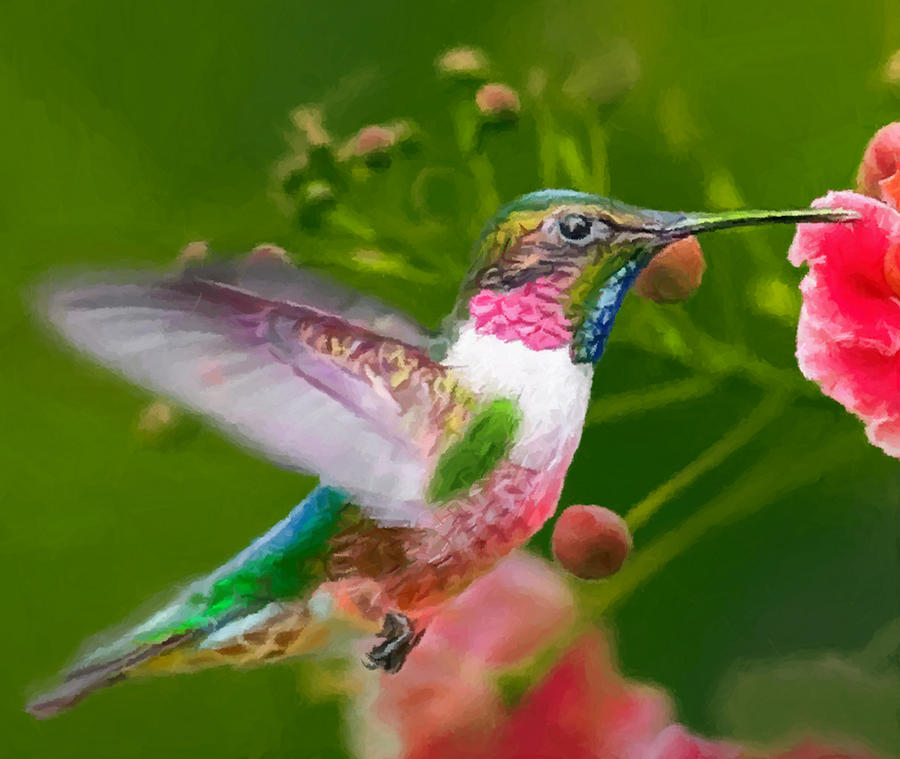 Hummingbird And Flower Painting Painting By Dr Bob Johnston