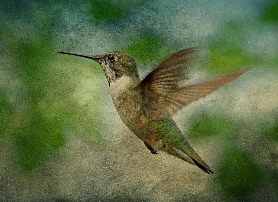 Hummingbird In Flight II Photograph