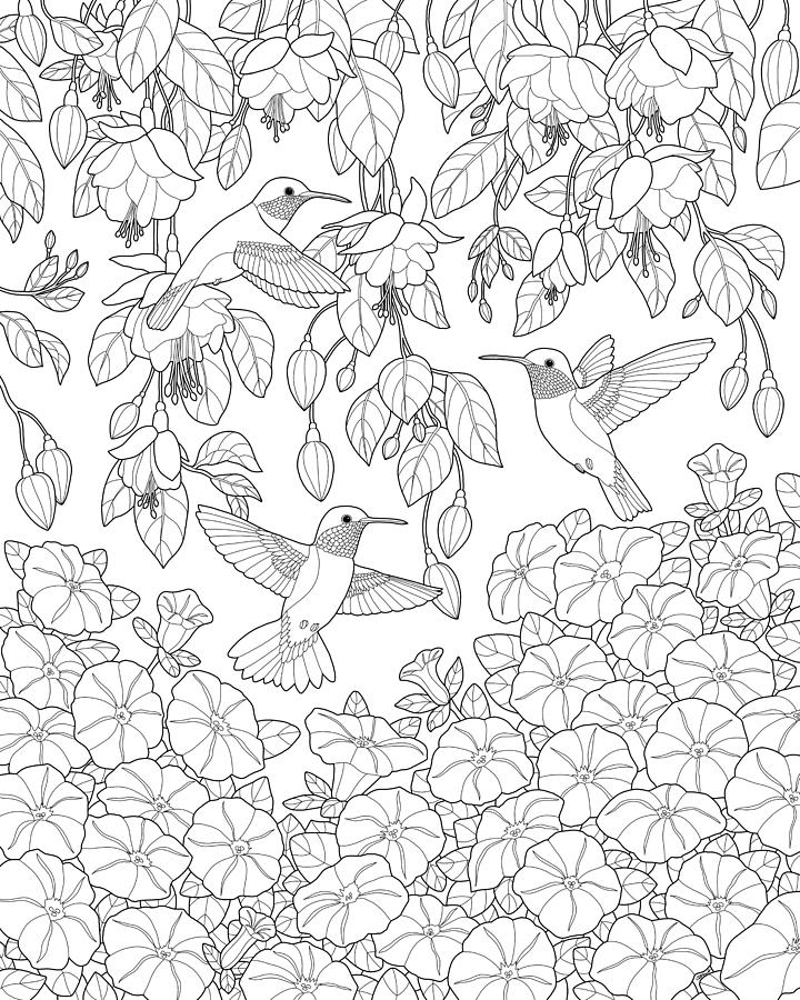 hummingbirds and flowers coloring page painting by crista