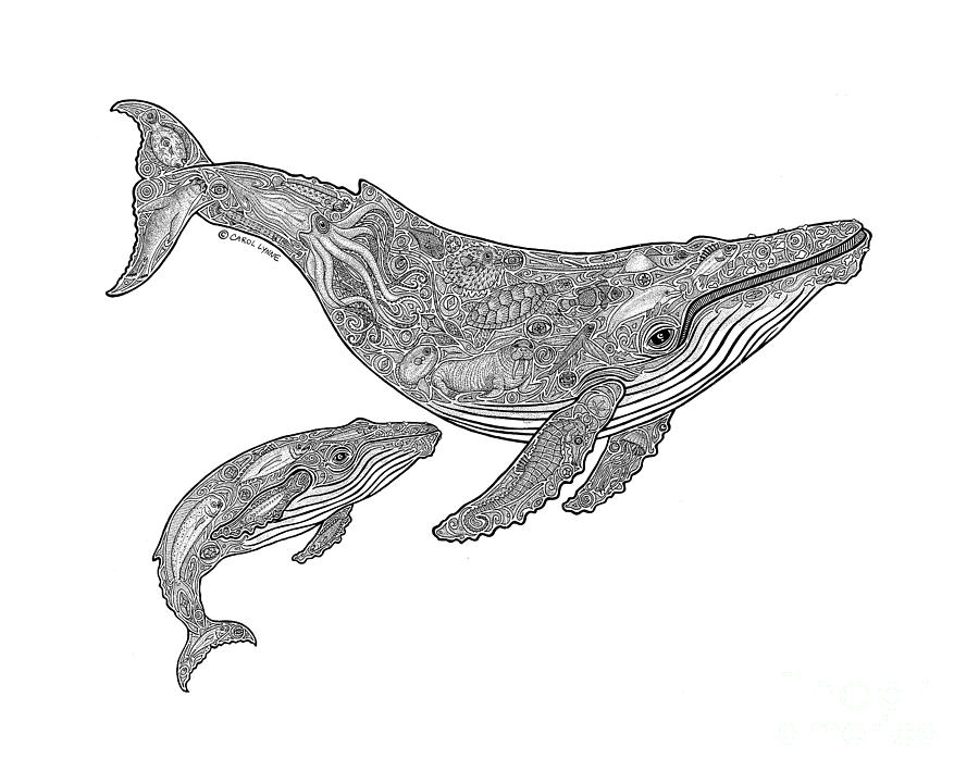 Humpback Whale Line Drawing : Humpback and calf drawing by carol lynne