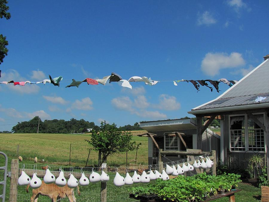 Amish Photographs Photograph - Hung Out To Dry by Renee Holder