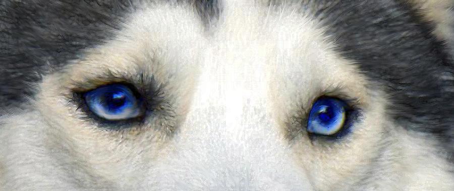 Husky Digital Art - Husky Eyes by Jane Schnetlage