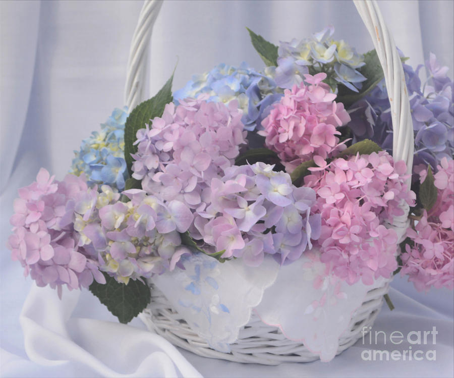 Hydrangea Still Life Photograph By Luv Photography
