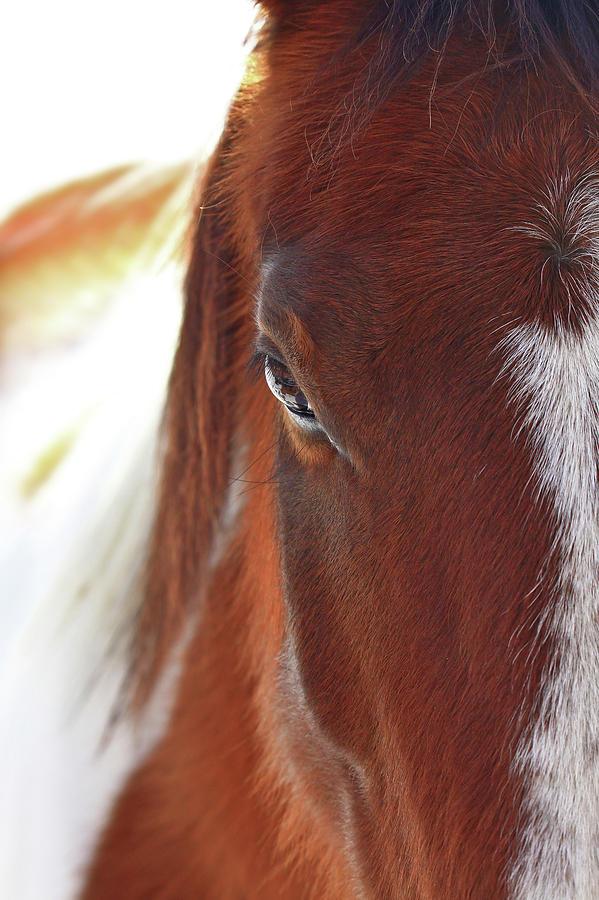 Animal Photograph - I Got My Eyes On You by Evelina Kremsdorf