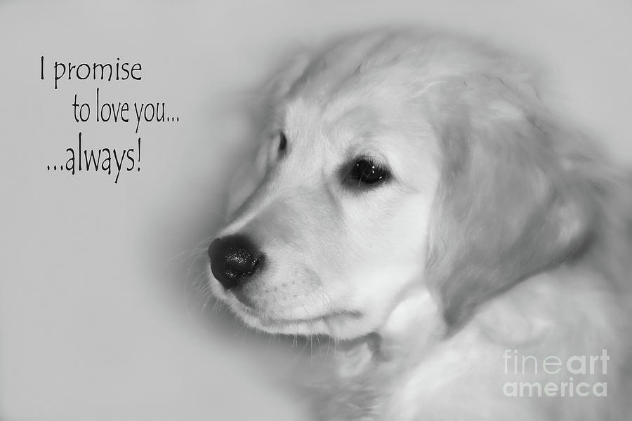 Golden Retriever Photograph - I Promise To Love You Always by Cathy  Beharriell