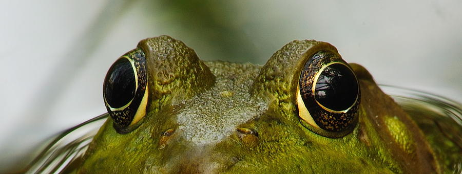 Wildlife Photograph - I See You by Michael Peychich
