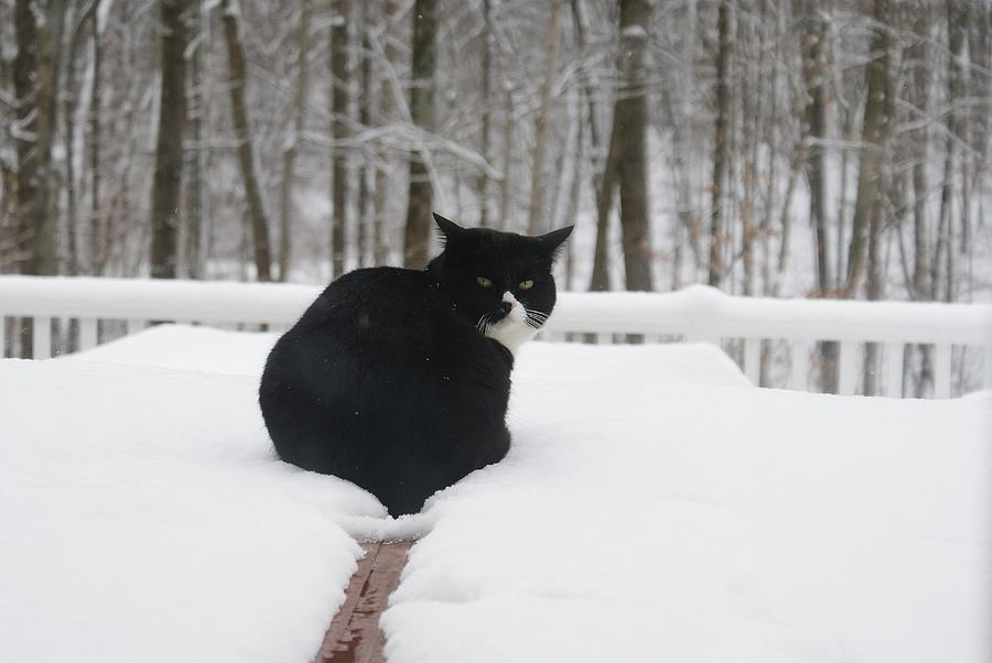 Cat Photograph - If Looks Could Kill by Lynda Dawson-Youngclaus