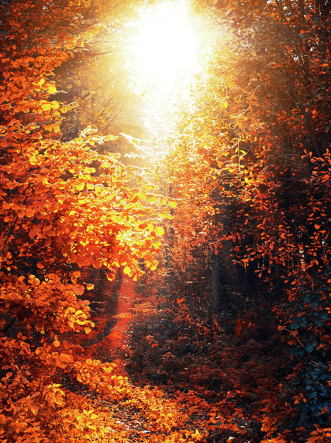 Forest Photograph - Illuminated Forest by Wim Lanclus