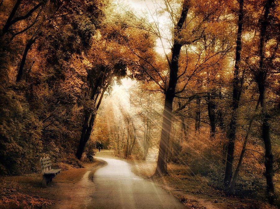 Autumn Photograph - Illumination by Jessica Jenney