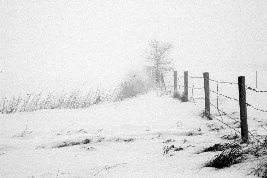 Landscape Photograph - In Defense Of Snow by Julie Lueders