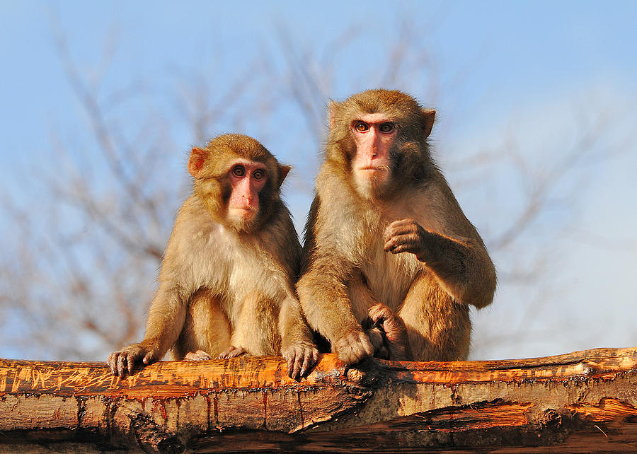 Monkeys Photograph - In Love by Alessandro Matarazzo