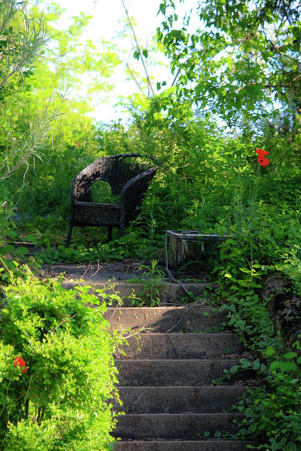 In The Garden Photograph
