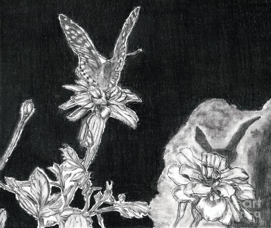 Butterfly Drawing - In The Shadow Of His Wings by Joy Neasley